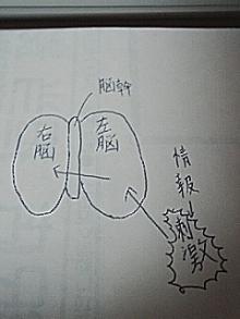 脳の情報構造