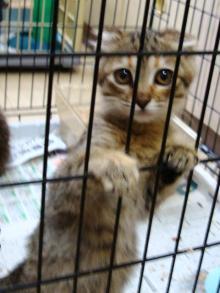 譲渡用の子猫たち