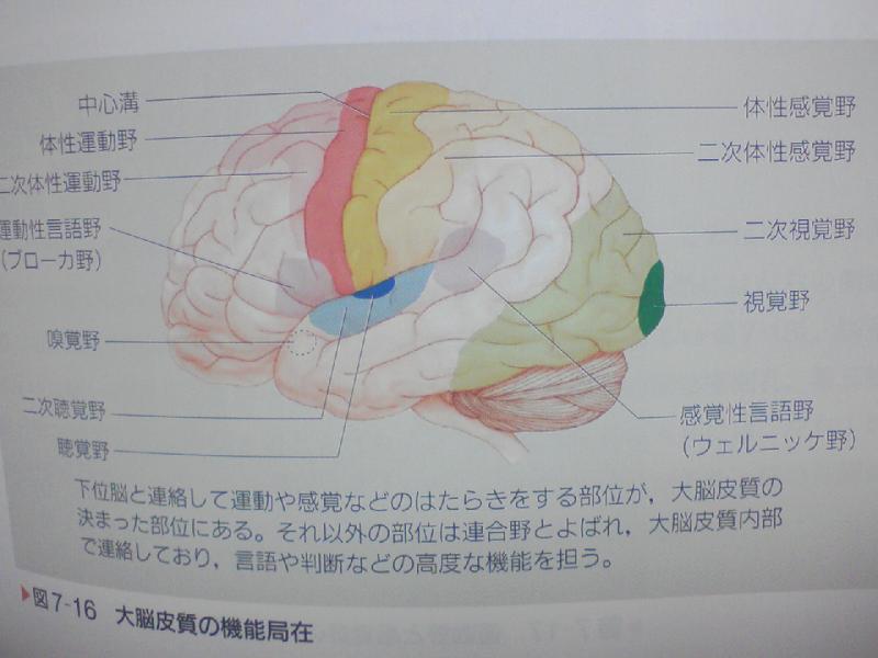 失語症 と 性 は 感覚