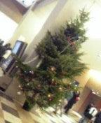 学校のツリー