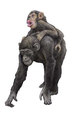 チンパンジー ブルーノ