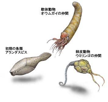 オルドビス紀の動物たち
