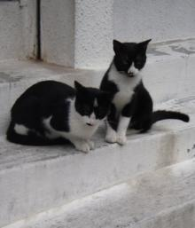 sakurazaka cats