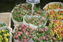 シンケルの花市