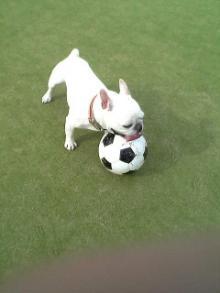 プシュサッカー