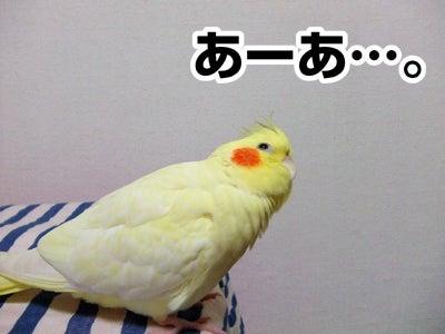 たんぽぽ042707