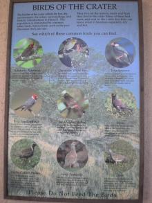 Birds of the crater