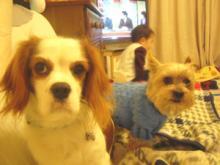 leon&dolly2