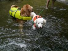 さァ、今度は泳げるかな~ リリーちゃん^^