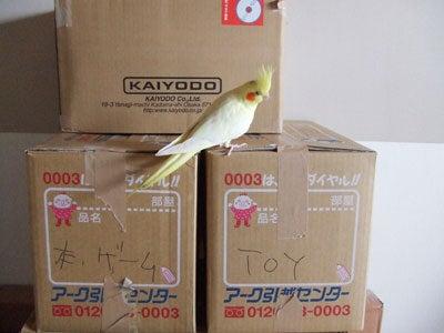 たんぽぽ072108