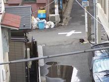 くろちゃん-5