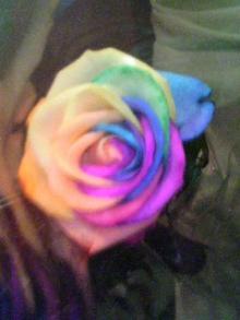 rainbow-rose