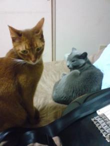 たかが猫 されど猫-君達、俺って幸せかい?