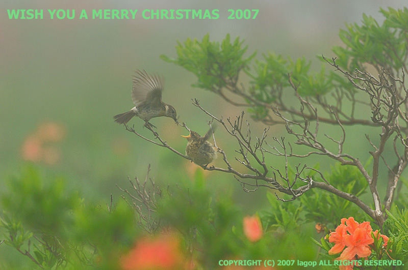 Merry X'mas '07