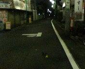 道の真ん中に黄色い薔薇が。