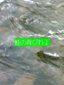 051120_1106~01001.JPG