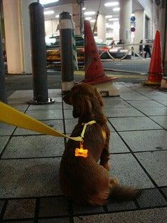 旅犬Laniのほほん風船記-忠犬Lani公