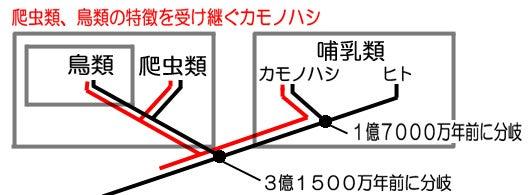 カモノハシ関連の系統図
