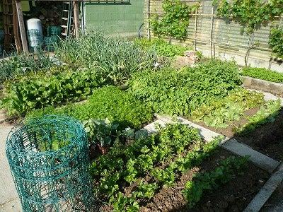 イタリア自家菜園