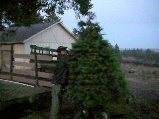 tree shaking machine