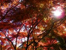 頂上の紅葉の様子