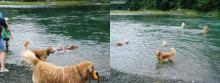 川の水は冷たいのにパパ達、気合入ってますねぇ・・
