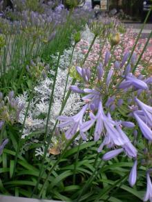 恵比寿の花壇