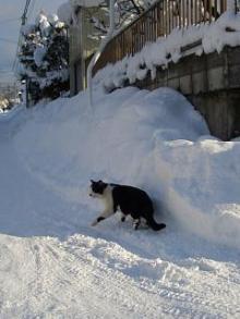 '06-山形雪道