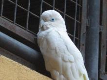 BIRD PARADISE-016
