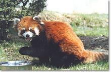 茶臼山 動物園