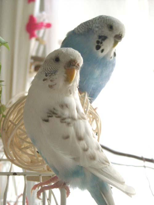 兵庫県の小鳥・鳥販売店・専門店をご案内一覧リス …