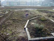 雪が解けた後のハーブ園(1月26日)