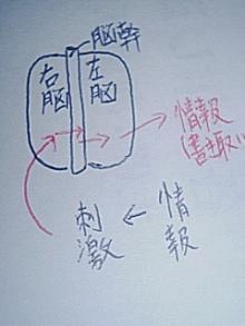 右脳プロセス
