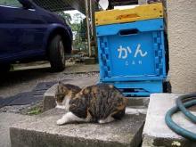 (オー)ミィちゃん-48