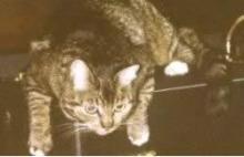 Cat on an anp