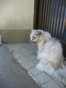 近所の猫ちゃん1