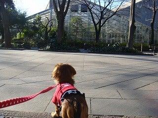 旅犬Laniのほほん風船記-東京農業大学