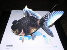 EPSON香港 黒出目金魚