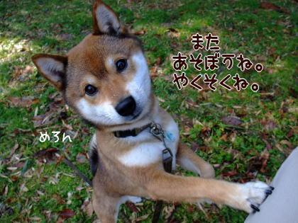 柴犬ひかりといちご のんびり日記-uruurumeron