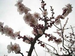 ☆ブログ版☆ 「東京ホームレス」 村上知奈美-梅