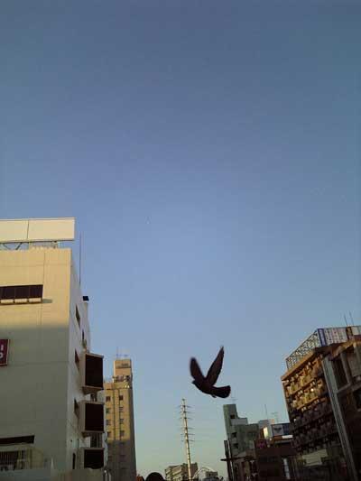 """夢野みさをの""""風の贈り物""""-鳥"""