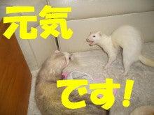 のほほ~ん動物園-254