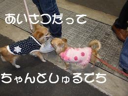 ☆':.*りんらんCafe*.:'☆