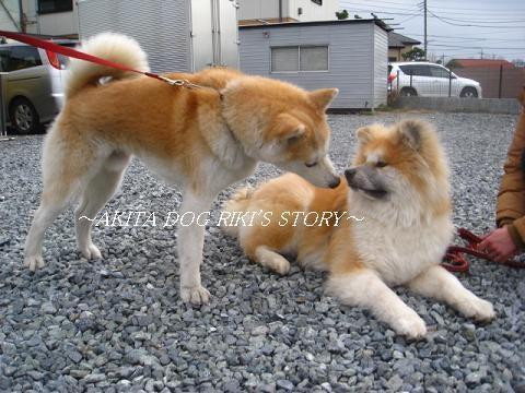 秋田犬 リキの物語
