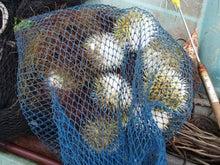 沖縄から遊漁船「アユナ丸」-オジーの漁