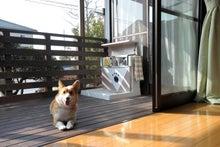 $愛犬こころと考える人と犬との快適物語