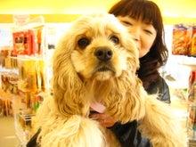 ペットショップ プチマリア 金沢店日記-前川さくら