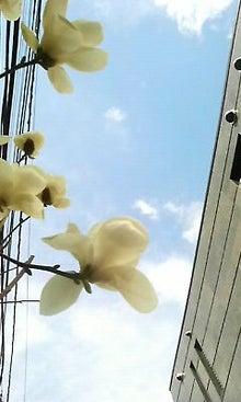 馬鈴花のお花紹介ブログ-image028.jpg