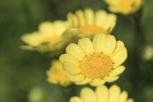 寂しい独り言-花