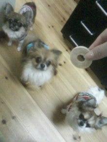 俺と犬と犬服作り。-029